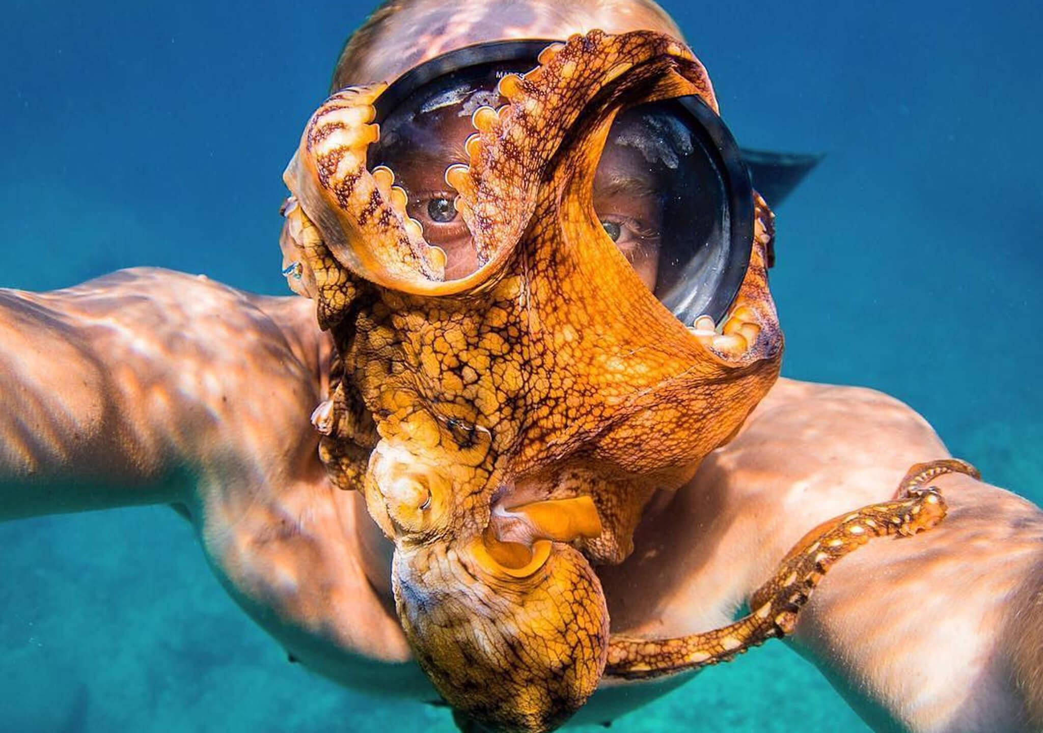 Un cefalópodo fascinante y no un accesorio
